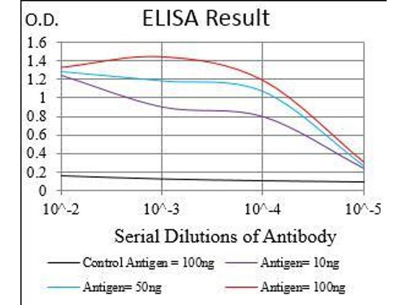 Image no. 1 for anti-Protein Phosphatase 1, Regulatory (Inhibitor) Subunit 1B (PPP1R1B) (AA 95-204) antibody (ABIN1724915)