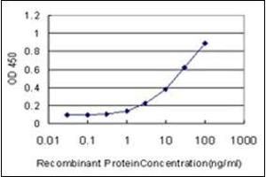 Image no. 1 for anti-cAMP Responsive Element Binding Protein 1 (CREB1) (AA 1-342) antibody (ABIN782353)