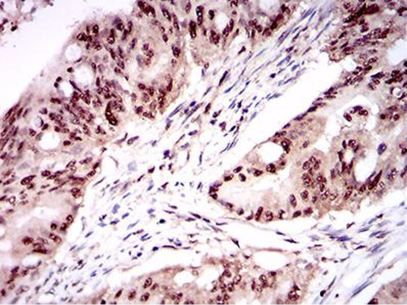 Image no. 2 for anti-One Cut Homeobox 3 (ONECUT3) (AA 350-455) antibody (ABIN1724872)