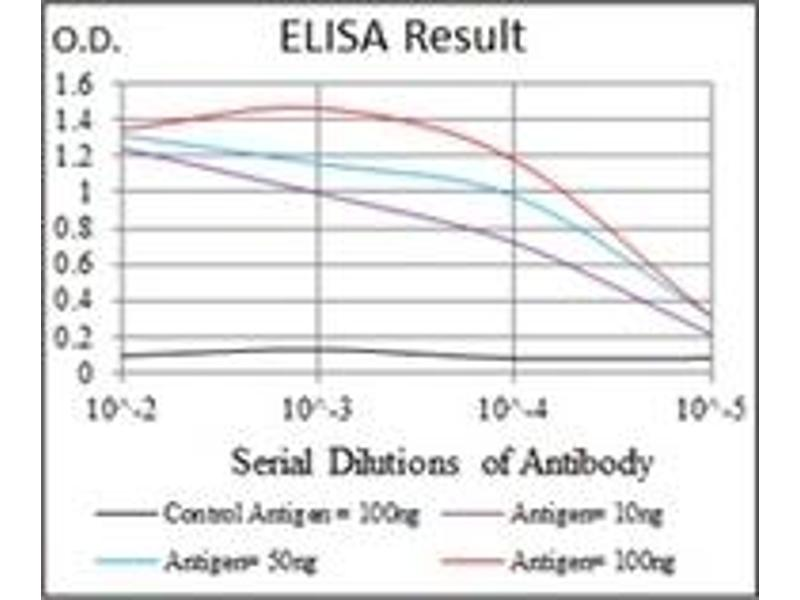 ELISA image for anti-Argininosuccinate Synthase 1 (ASS1) antibody (ABIN1105455)
