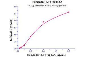 Image no. 2 for Insulin-Like Growth Factor 1 Receptor (IGF1R) (AA 31-932) (Active) protein (His tag) (ABIN2181260)