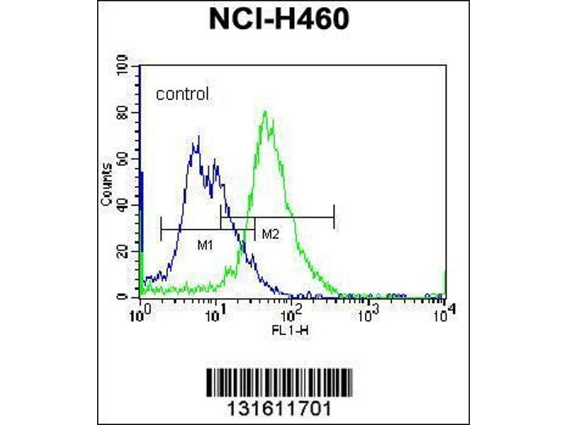 Flow Cytometry (FACS) image for anti-phospholipase C-Like 2 (PLCL2) (AA 1099-1126), (C-Term) antibody (ABIN655943)