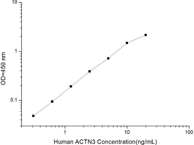 Actinin, alpha 3 (ACTN3) ELISA Kit (2)