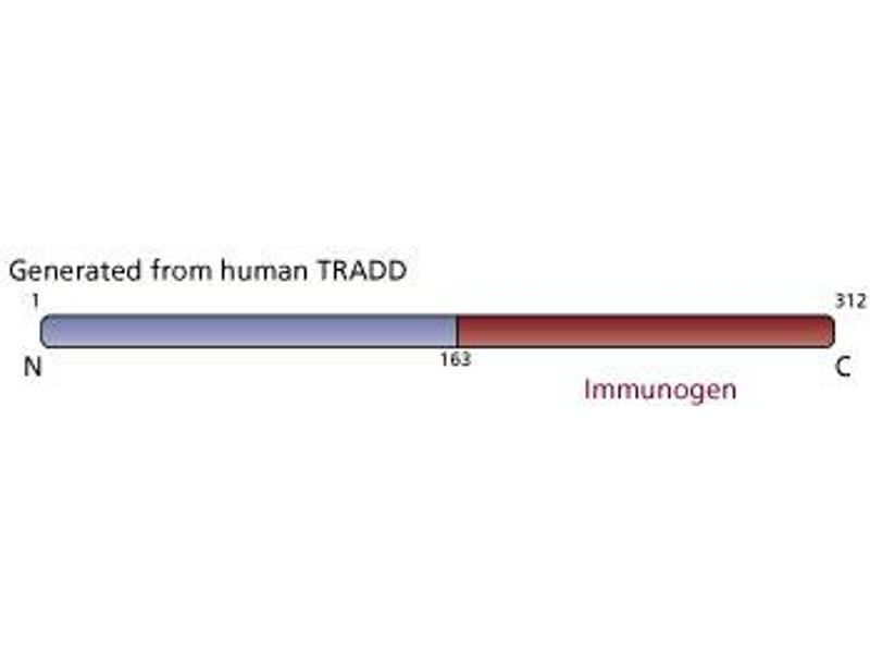 image for anti-TNFRSF1A-Associated Via Death Domain (TRADD) (AA 163-312) antibody (ABIN968046)