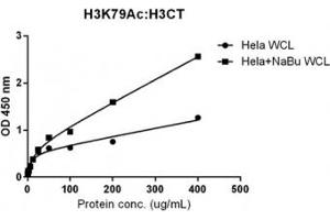 Image no. 3 for anti-Histone Cluster 3, H3 (HIST3H3) (C-Term), (pan) antibody (ABIN4953364)