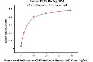 Image no. 1 for 5'-Nucleotidase, Ecto (CD73) (NT5E) (AA 27-549) protein (His tag) (ABIN6809998)
