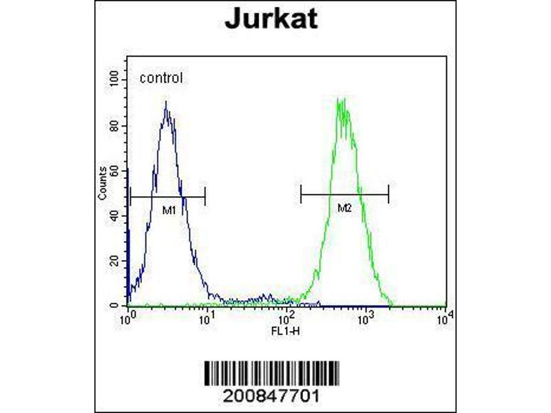 Flow Cytometry (FACS) image for anti-RPS6KB2 antibody (Ribosomal Protein S6 Kinase, 70kDa, Polypeptide 2) (ABIN659035)