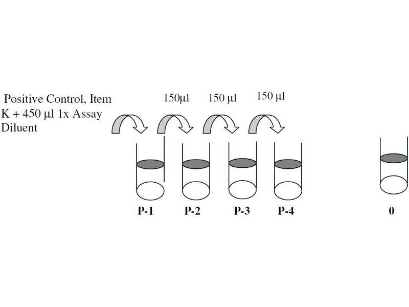 image for CAMP Responsive Element Binding Protein 1 (CREB1) ELISA Kit (ABIN1981714)