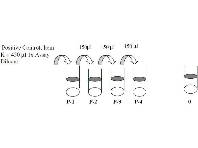 CAMP Responsive Element Binding Protein 1 (CREB1) ELISA Kit