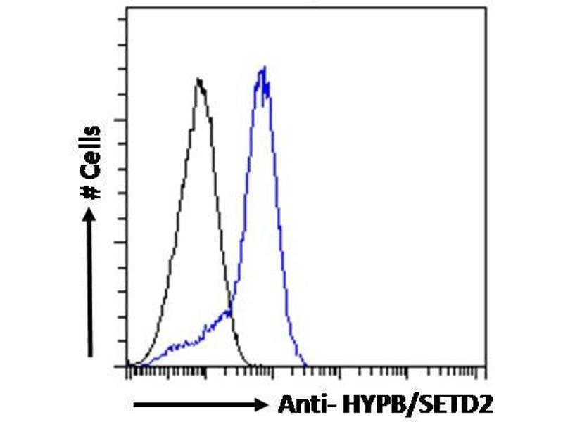 Image no. 2 for anti-SET Domain Containing 2 (SETD2) (Internal Region) antibody (ABIN238587)