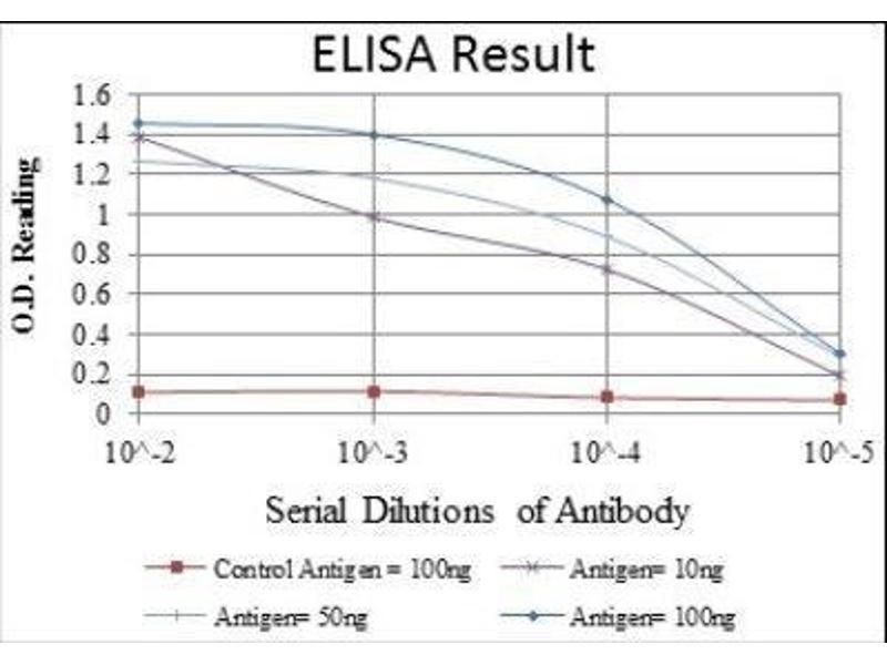 ELISA image for anti-cAMP Responsive Element Binding Protein 1 (CREB1) antibody (ABIN4300443)
