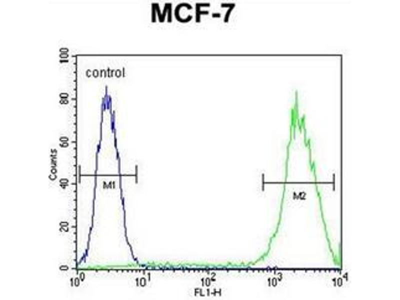 Flow Cytometry (FACS) image for anti-Lectin, Galactoside-Binding, Soluble, 3 (LGALS3) (AA 170-199), (C-Term) antibody (ABIN952435)