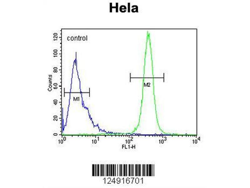 Flow Cytometry (FACS) image for anti-K2C78 (AA 176-203), (Center) antibody (ABIN653813)