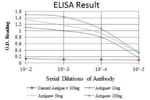 ELISA image for anti-CBL antibody (Cas-Br-M (Murine) Ecotropic Retroviral Transforming Sequence) (ABIN968993)