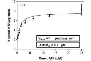 Image no. 1 for 3-phosphoinositide Dependent Protein Kinase-1 (PDPK1) (AA 1-460) protein (His tag) (ABIN5570542)