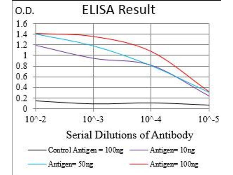 Image no. 5 for anti-KH Domain Containing, RNA Binding, Signal Transduction Associated 2 (KHDRBS2) (AA 160-349) antibody (ABIN5924815)
