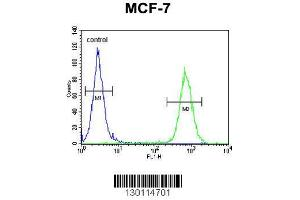Image no. 1 for anti-rho GTPase Activating Protein 44 (ARHGAP44) (AA 784-811), (C-Term) antibody (ABIN654613)