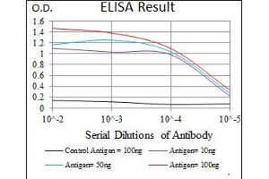 Image no. 7 for anti-Signal Transducer and Activator of Transcription 5A (STAT5A) antibody (ABIN1491603)