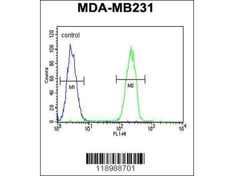 Flow Cytometry (FACS) image for anti-CASP5 antibody (Caspase 5, Apoptosis-Related Cysteine Peptidase) (AA 162-191) (ABIN654898)