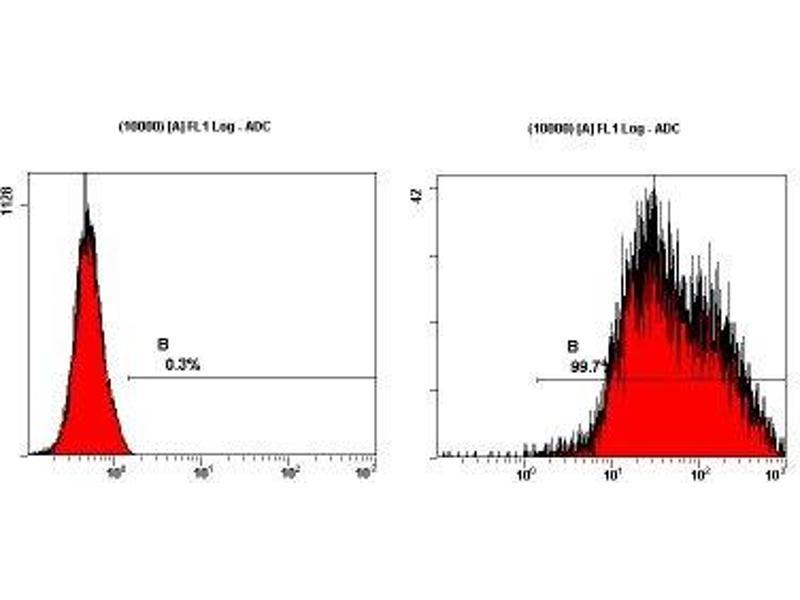 Flow Cytometry (FACS) image for anti-Podocalyxin-Like (PODXL) antibody (ABIN261324)