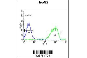 Flow Cytometry (FACS) image for anti-Epiregulin antibody (EREG) (ABIN2158733)
