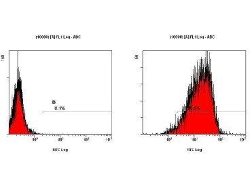 Flow Cytometry (FACS) image for anti-CD11b antibody (Integrin alpha M) (Internal Region) (ABIN258322)