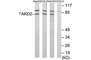 Image no. 1 for anti-FAST Kinase Domains 2 (FASTKD2) (AA 171-220) antibody (ABIN2889780)