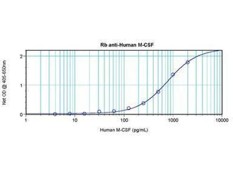 image for anti-CSF1 antibody (Colony Stimulating Factor 1 (Macrophage)) (ABIN465551)