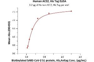 Image no. 2 for Angiotensin I Converting Enzyme 2 (ACE2) protein (His tag) (ABIN6952618)