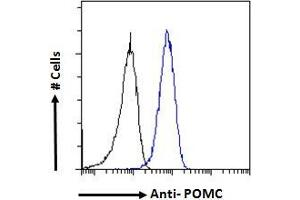 Image no. 6 for anti-Proopiomelanocortin (POMC) (C-Term) antibody (ABIN185387)