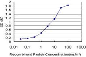 Image no. 1 for anti-Centrin, EF-Hand Protein, 2 (CETN2) (AA 85-172) antibody (ABIN560340)