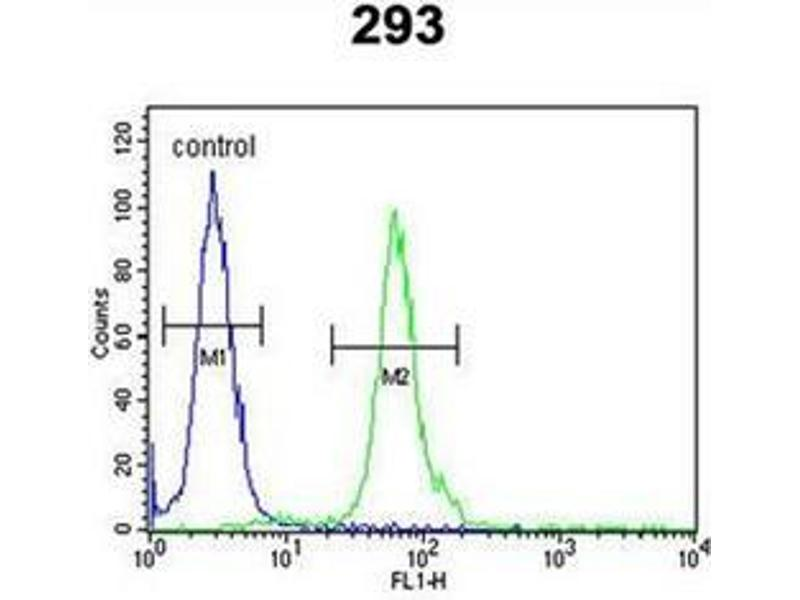 Flow Cytometry (FACS) image for anti-DNA Fragmentation Factor, 40kDa, beta Polypeptide (Caspase-Activated DNase) (DFFB) (AA 1-30), (N-Term) antibody (ABIN951896)
