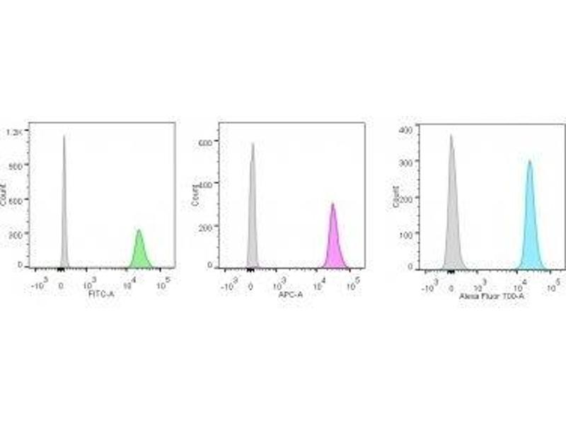 image for anti-Nucleolin (NCL) antibody (PerCP) (ABIN6166140)