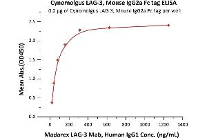 Image no. 2 for Lymphocyte-Activation Gene 3 (LAG3) (AA 18-449) (Active) protein (Fc Tag) (ABIN5674617)