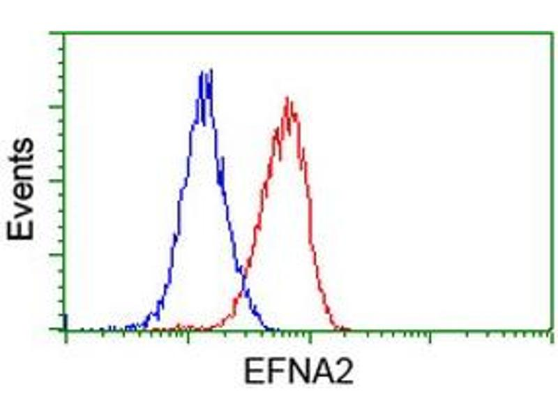 image for anti-Ephrin A2 (EFNA2) antibody (ABIN1497954)