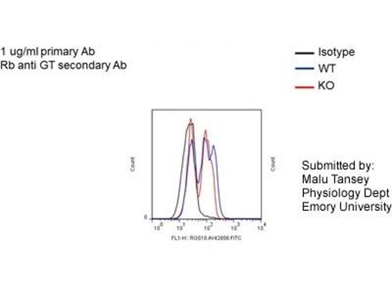 Flow Cytometry (FACS) image for anti-Regulator of G-Protein Signaling 10 (RGS10) (N-Term) antibody (ABIN2775606)