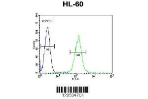 Image no. 1 for anti-Phospholipase A2, Group IID (PLA2G2D) (AA 105-131), (C-Term) antibody (ABIN655102)