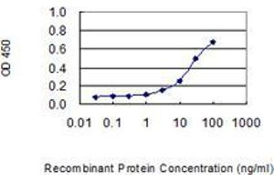 Image no. 1 for anti-Endonuclease, PolyU-Specific (ENDOU) (AA 270-369) antibody (ABIN2565750)