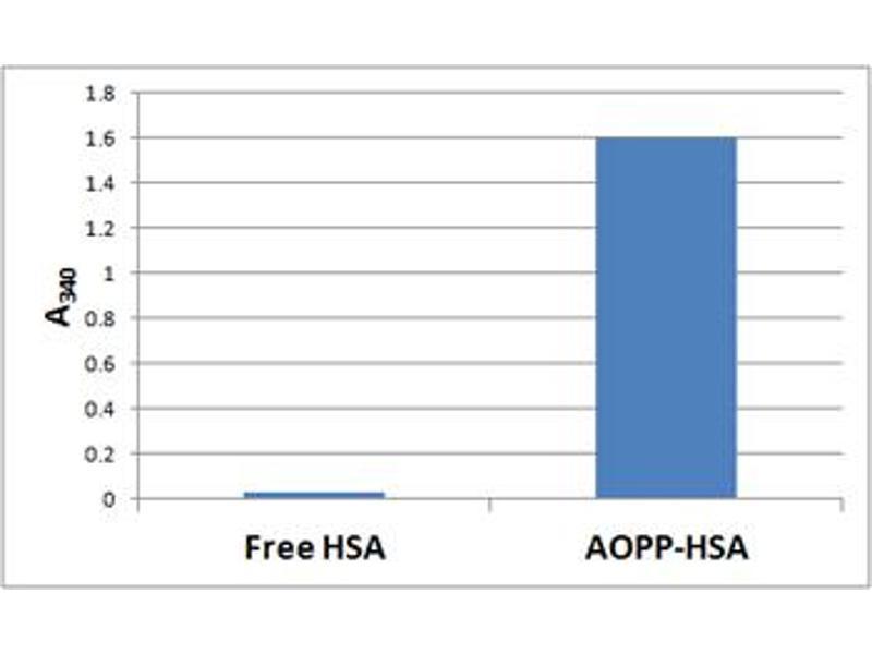 Cytotoxicity Test (CyTox) image for OxiSelect™ AOPP Assay Kit (200 assays) (ABIN2344959)