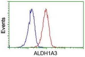 Image no. 2 for anti-Aldehyde Dehydrogenase 1 Family, Member A3 (ALDH1A3) (AA 1-100), (AA 413-512) antibody (ABIN1490536)