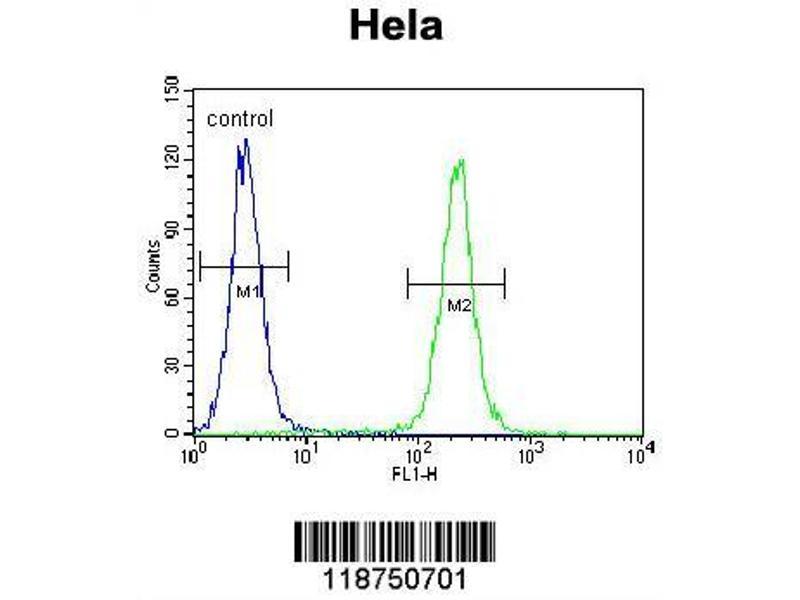 Flow Cytometry (FACS) image for anti-Insulin-Like Growth Factor 2 (IGF2) (AA 39-68), (Arg54), (Center) antibody (ABIN650616)