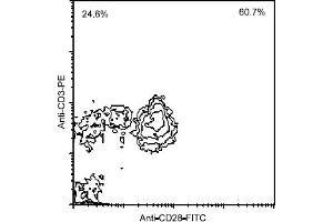 Flow Cytometry (FACS) image for anti-CD28 antibody (CD28)  (FITC) (ABIN371358)