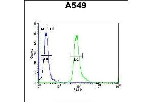 Image no. 2 for anti-Family with Sequence Similarity 46, Member D (FAM46D) (AA 210-239) antibody (ABIN5537732)