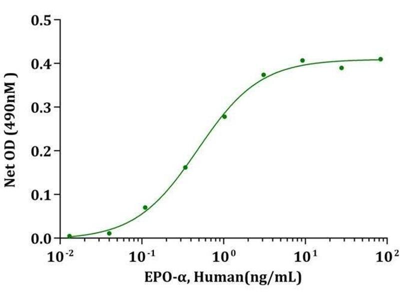 Activity Assay (AcA) image for Erythropoietin (EPO) (AA 28-193) (Active) protein (ABIN987828)
