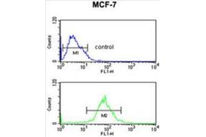Flow Cytometry (FACS) image for anti-AIM2 antibody (Absent in Melanoma 2) (N-Term) (ABIN950314)