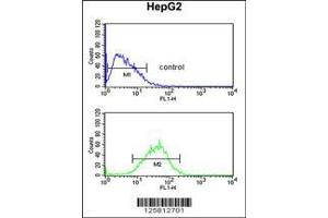 Flow Cytometry (FACS) image for anti-WD Repeat Domain 82 (WDR82) (AA 1-30), (N-Term) antibody (ABIN651007)