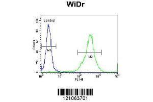 Image no. 3 for anti-Family with Sequence Similarity 3, Member B (FAM3B) (AA 24-51), (N-Term) antibody (ABIN390878)