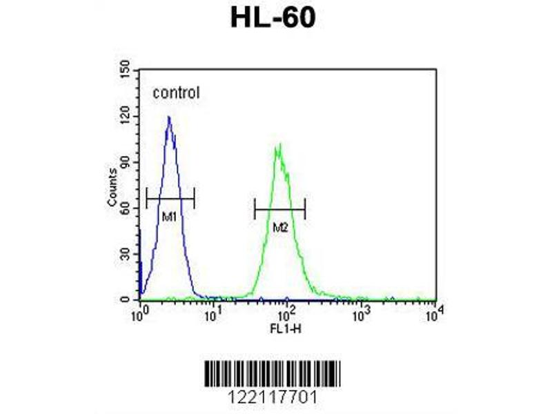 Flow Cytometry (FACS) image for anti-Interleukin 2 Receptor, gamma (IL2RG) (AA 76-101), (N-Term) antibody (ABIN653403)