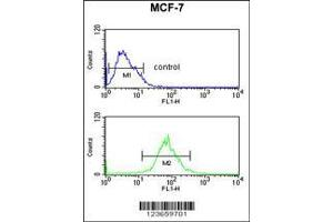 Flow Cytometry (FACS) image for anti-AIM2 antibody (Absent in Melanoma 2) (AA 4-32) (ABIN653833)