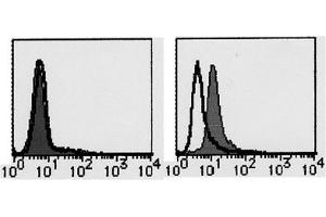 Flow Cytometry (FACS) image for anti-FLT3 antibody (Fms-Related tyrosine Kinase 3)  (FITC) (ABIN487500)